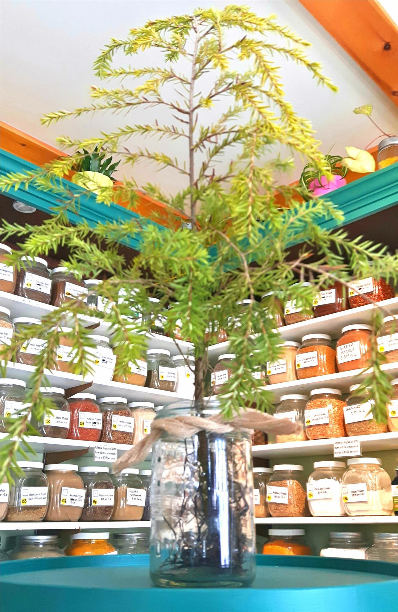 Free tree seedling from Country Cupboard for first 100 people