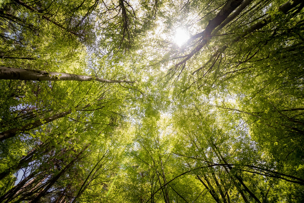 Seven reasons why we need trees