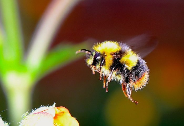 Be pollinator friendly: Free event in October