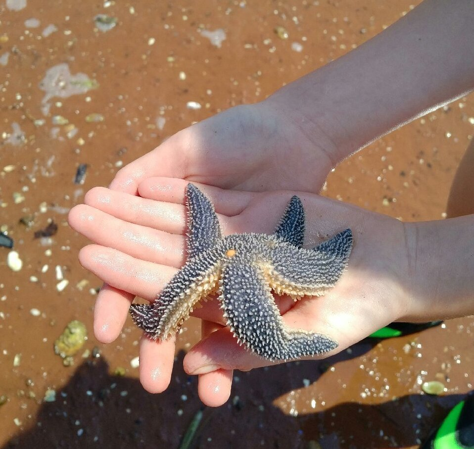 Hank, the starfish, and the poverty in front of us