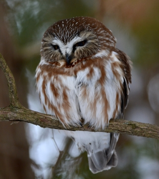 Christmas bird count for kids at Fleming College - Lindsay Advocate